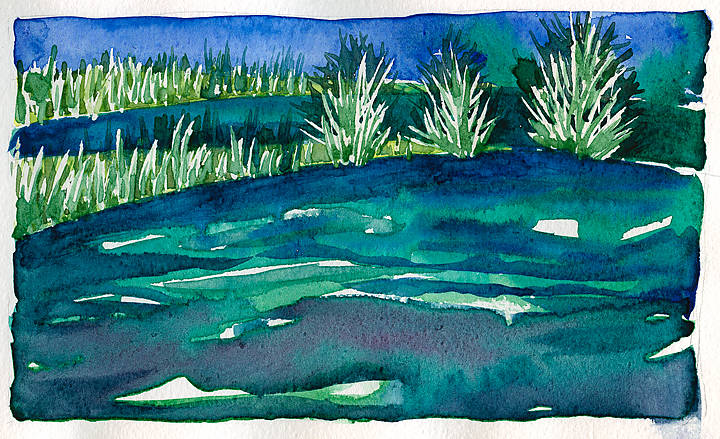 leaes_of_grass_5073590590_o.jpg